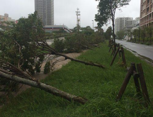 台風24号で休診します。